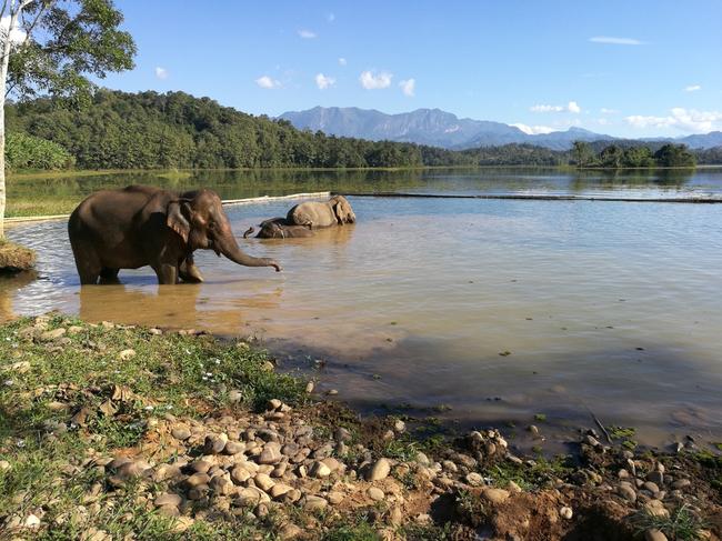 ElephantsLaos-ST