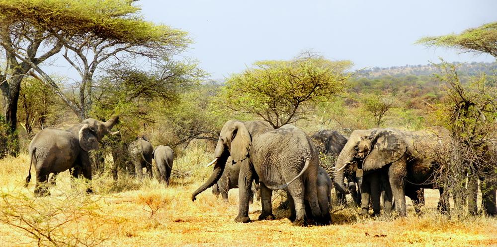 ST_Kenya_Safari