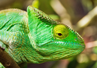 EXOTIC! Cheap flights from Houston to Madagascar for $696!