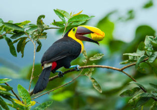 SUMMER: New Orleans, San Fran and NYC to Ecuador from $306!