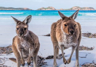 AU Summer! Cheap non-stop flights from California to Australia from only $593!