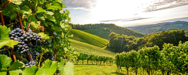 Tuscany gateway! 4-night stay at top-rated countryside apartment + cheap flights from Frankfurt Hahn for just €94!
