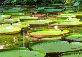 Cheap flights from Italy to Belem, Brazil (Amazon Forest) from only €330!