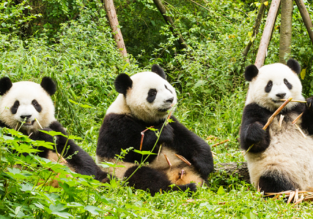 5* Hainan: cheap flights from Chicago to Chengdu (non-stop), Guangzhou or Beijing, China from only $328!