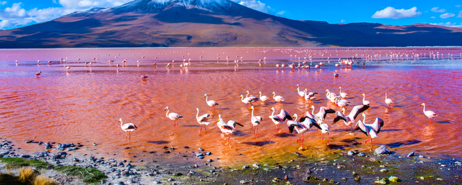 Cheap flights from New York to breathtaking Bolivia for only $446!