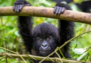 Cheap flights from Sweden to Uganda or Rwanda from only €340!