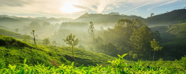 Cheap flights from Kuala Lumpur to Kochi, India for only $76!