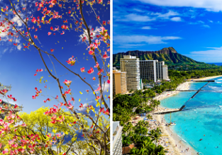 Around the world from Europe to Japan, Hawaii and California from only €630!
