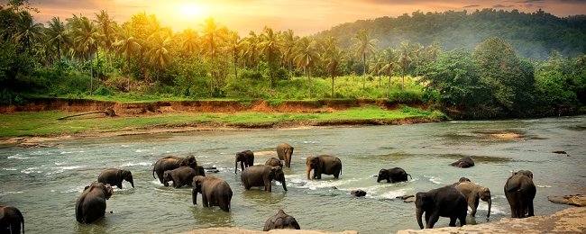 Cheap full-service non-stop flights from Thailand to Sri Lanka for only $179!
