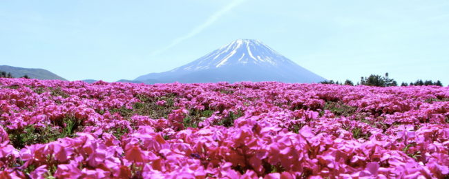 5* ANA: cheap spring flights from Luxembourg to Tokyo for just €392!