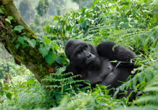 Cheap flights from France or Germany to Uganda or Rwanda from only €288!