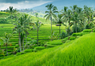 Cheap full-service non-stop flights from Vietnam to Bali for only $121!