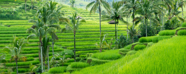 Cheap flights from Prague, Budapest and Vienna to Bali from only €384!