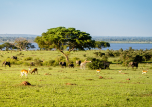 Cheap flights from Italian cities to Entebbe, Uganda from only €368!