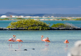 7-night stay in well-rated hotel in exotic Bonaire + KLM direct flights from Amsterdam for €513!