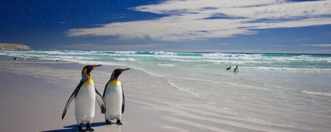 MEGA EXOTIC! Rome to Falklands for only €575! (+ add a day stopover in Buenos Aires for €76 more)