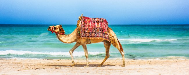 Peak summer! Cheap flights from the UK to Tunisia for only £54!