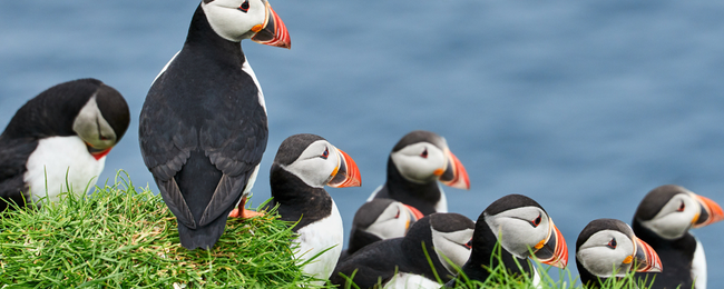 SUMMER: Cheap flights from Berlin to Faroe Islands for only €214!