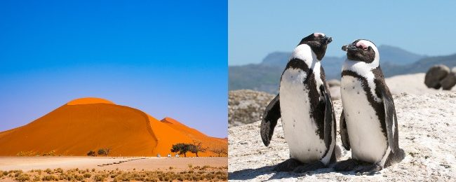 Lisbon, Cape Town, Namibia and Porto in one trip from Vienna from €461!