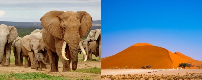 Cheap flights from Ireland to South Africa or Namibia from only €360!