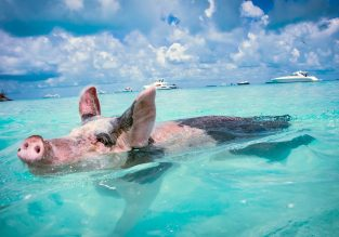 Cheap flights from Italian cities to Exuma, Bahamas from only €419!