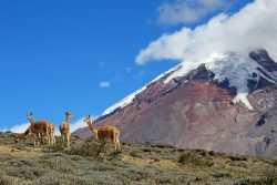 Autumn & Winter! Cheap flights from Germany to Ecuador for only €406!