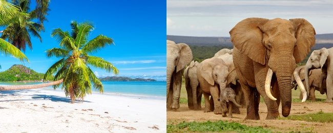 5 Etihad Seychelles And South Africa In One Trip From