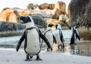 Cheap flights from Vienna to Cape Town, South Africa for €373!