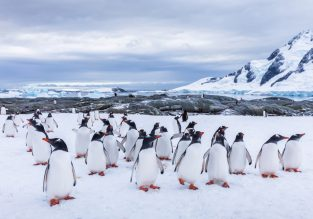 WOW! 14 night full-board cruise from Argentina to Antartica, Patagonia, Falklands and Uruguay including flights from UK from £2139!