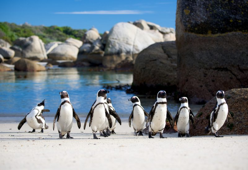 South Africa's Summer! Cheap flights from Germany to Cape Town for €387!