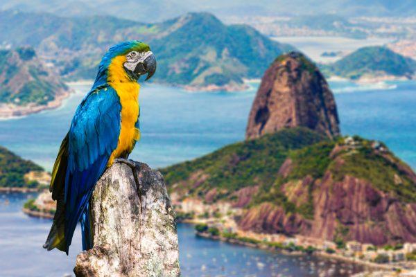 Rio de Janeiro ST