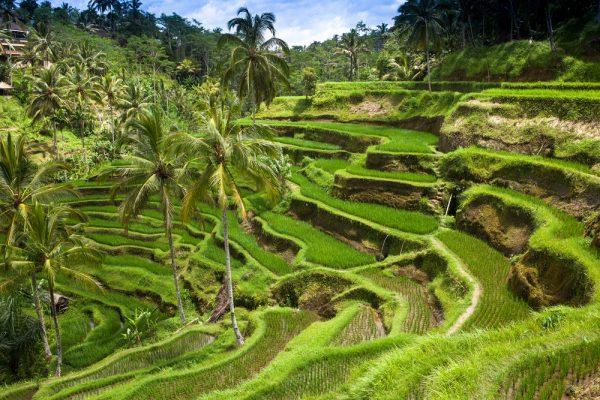 ST Bali ph Manamana
