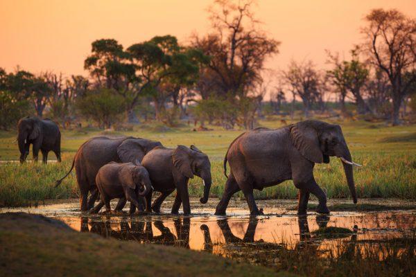 ST Botswana