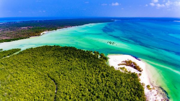 NEW 750px ST Tropical paradise island Zanzibar aerial view. Place the mangrove forest of Michamvi