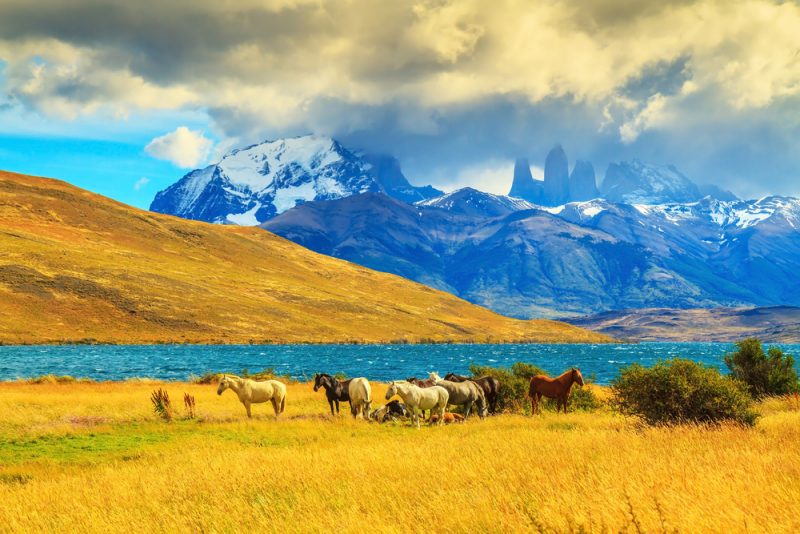 ST Patagonia in Chile kavram