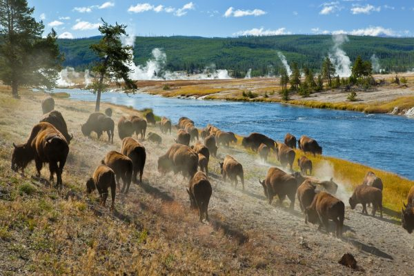 ST Yellowstone3