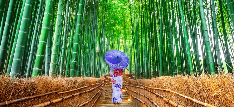 750px ST bamboo forest Kyoto Japan ph Guitar photographer 2