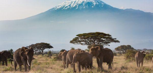 750px Safari KilimanjaroAmboseliNationalParkKenya ST